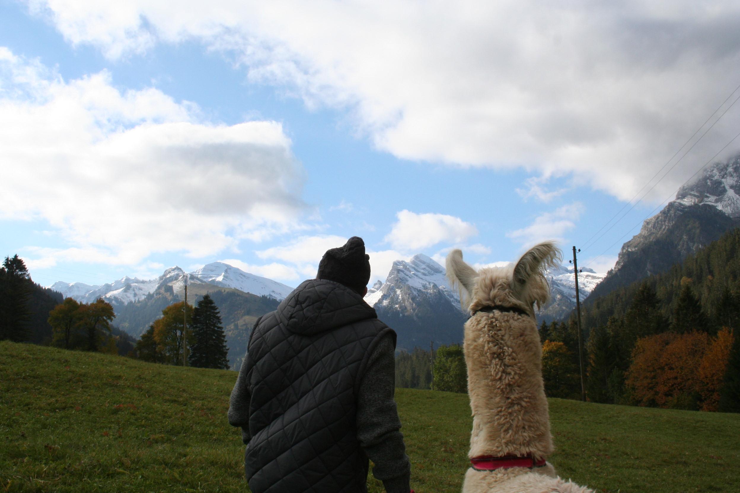 Auch die Lamas geniessen die schöne Aussicht