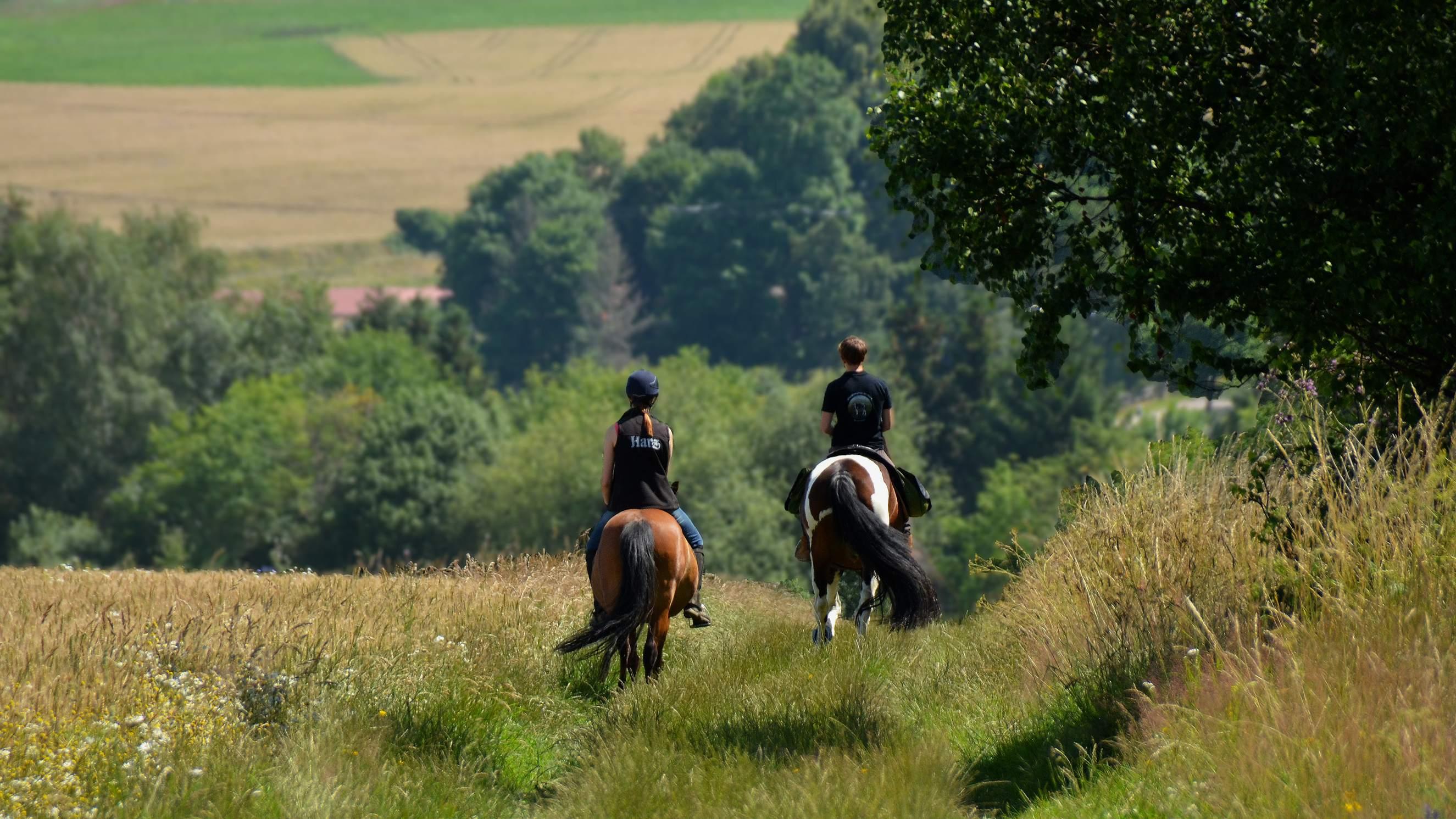 Hasselfelde - geführter Ausritt mit eigenem Pferd