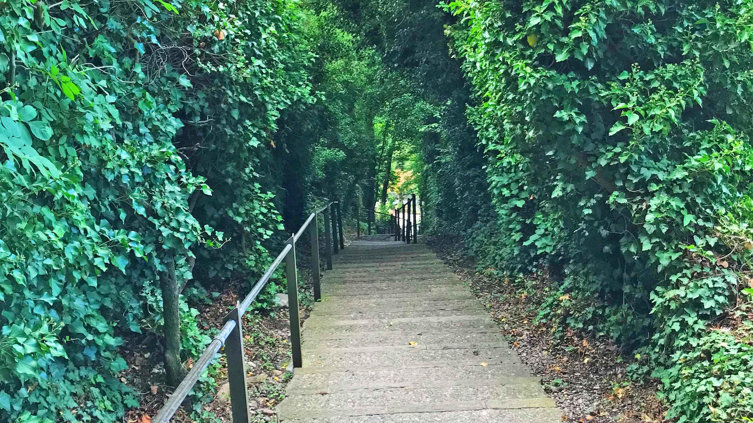 jakobshuebeli-thun-treppe-gebuesch.jpg