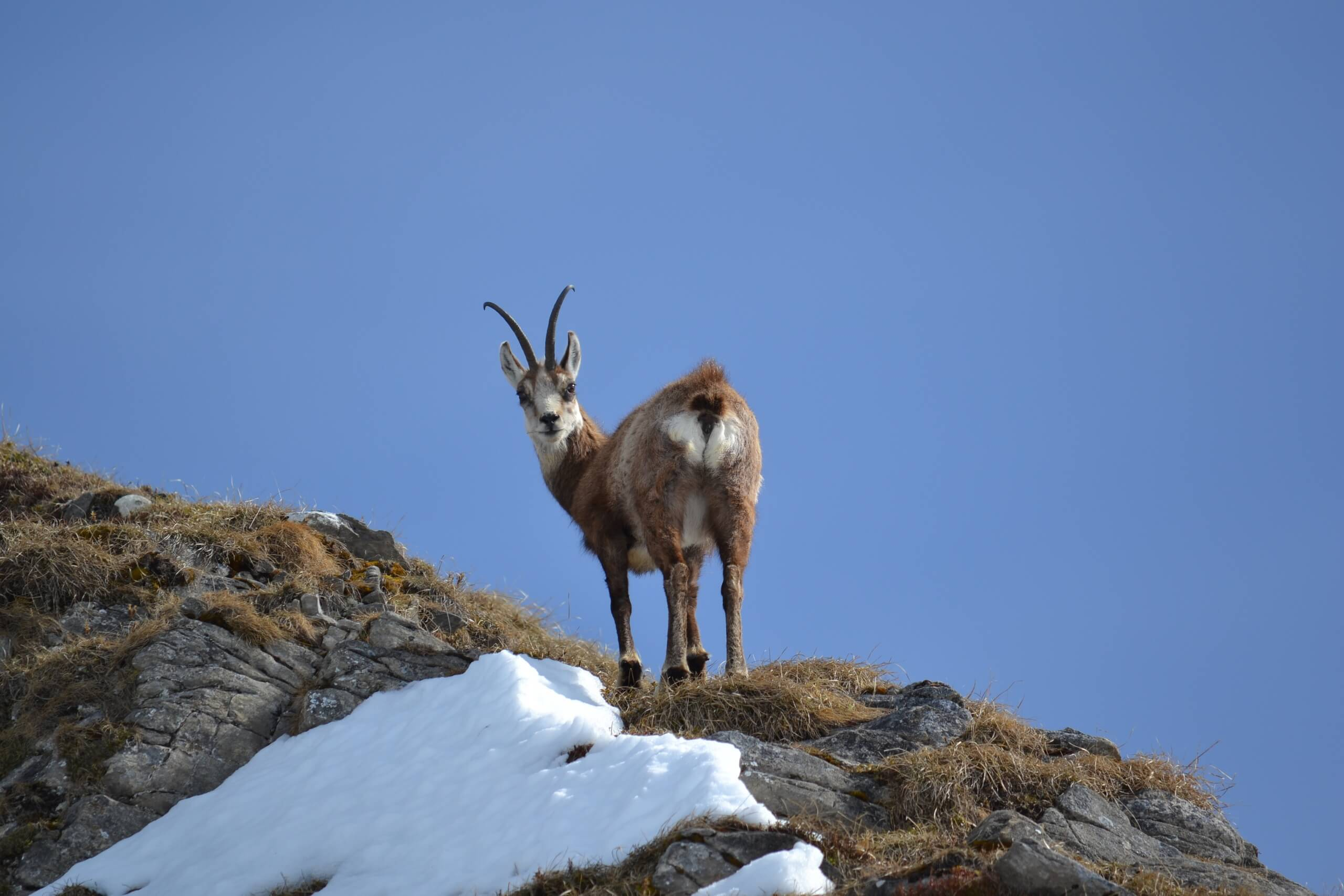 habkern-baerg-wild-landschaftstouren-wildbeobachtung