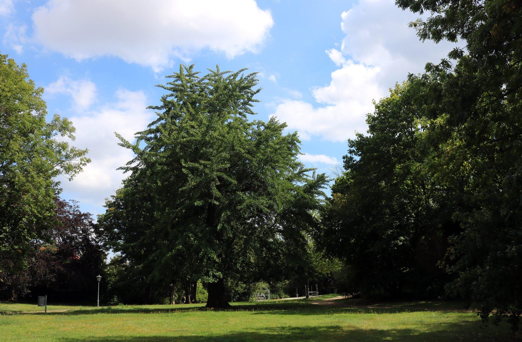 Nordhausen-Park-Promenade