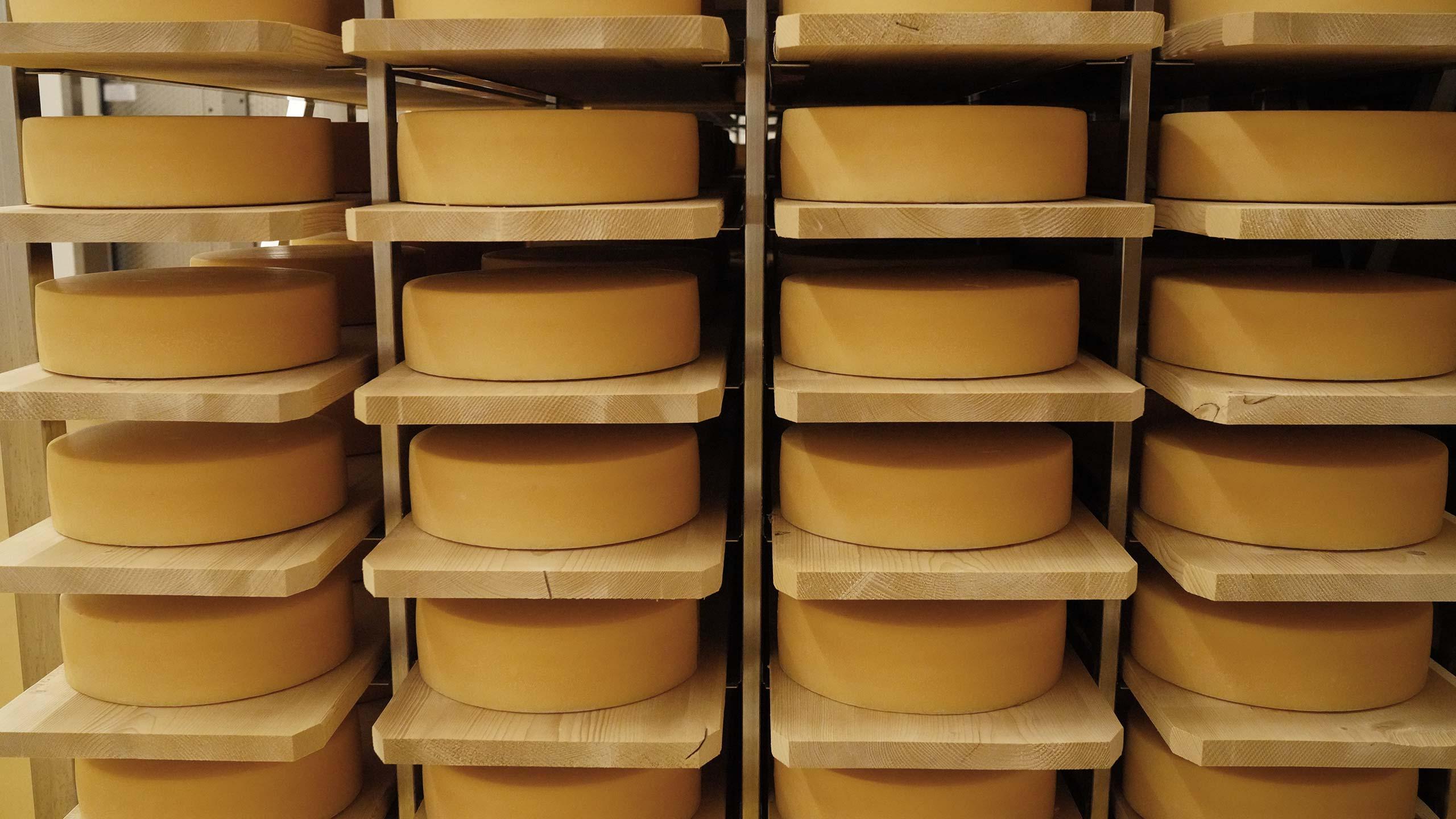 simmentaler-kaesewel-kaesekeller-voller-kaeseleibe.jpg