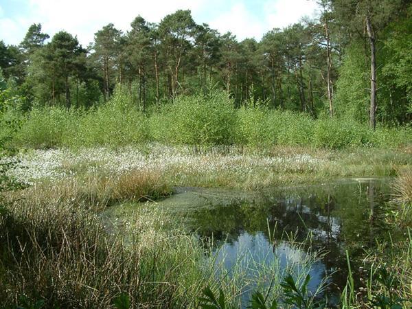 Das Hühnermoor, Relikt einer 4.000 Jahre alten Hochmoorlandschaft.
