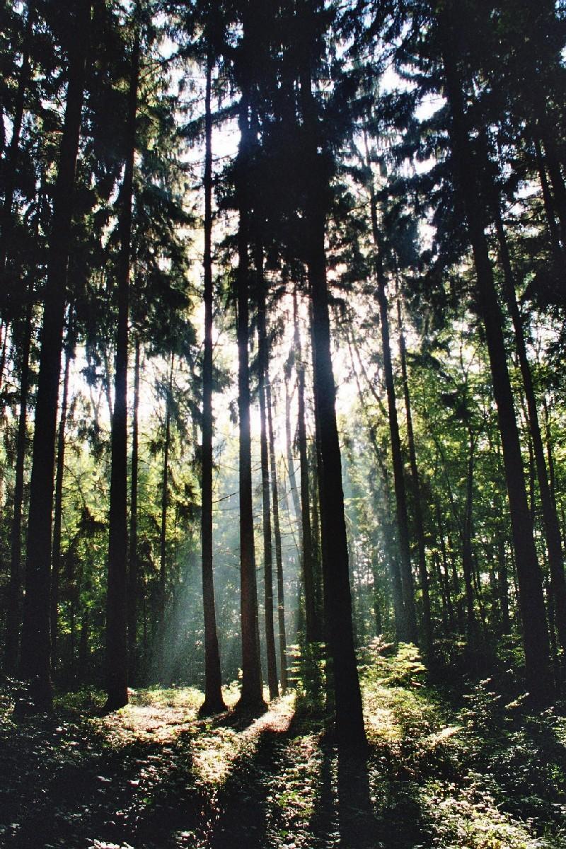Wald_neu