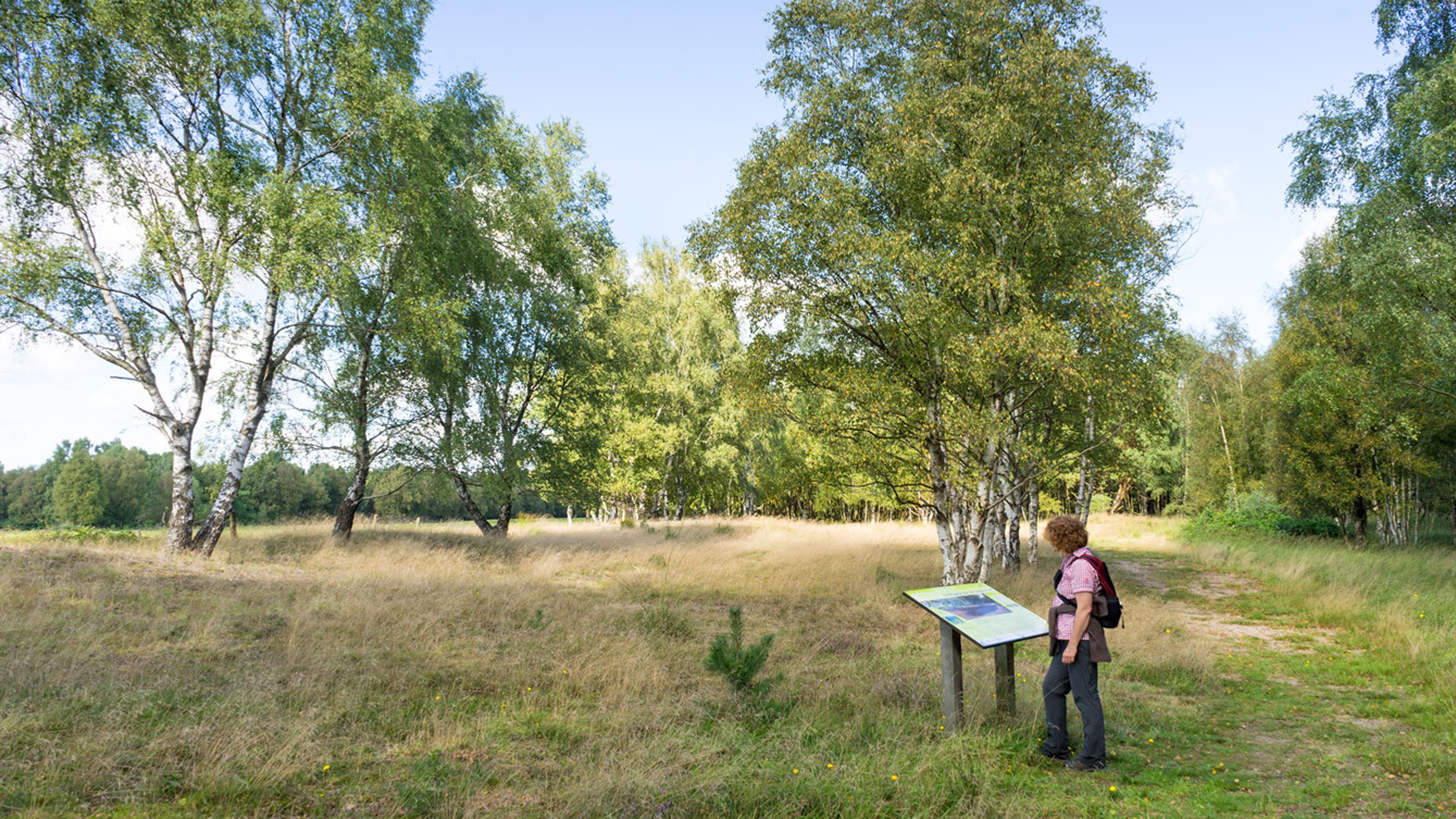 Diese Heidefläche blüht so richtig im August u. September