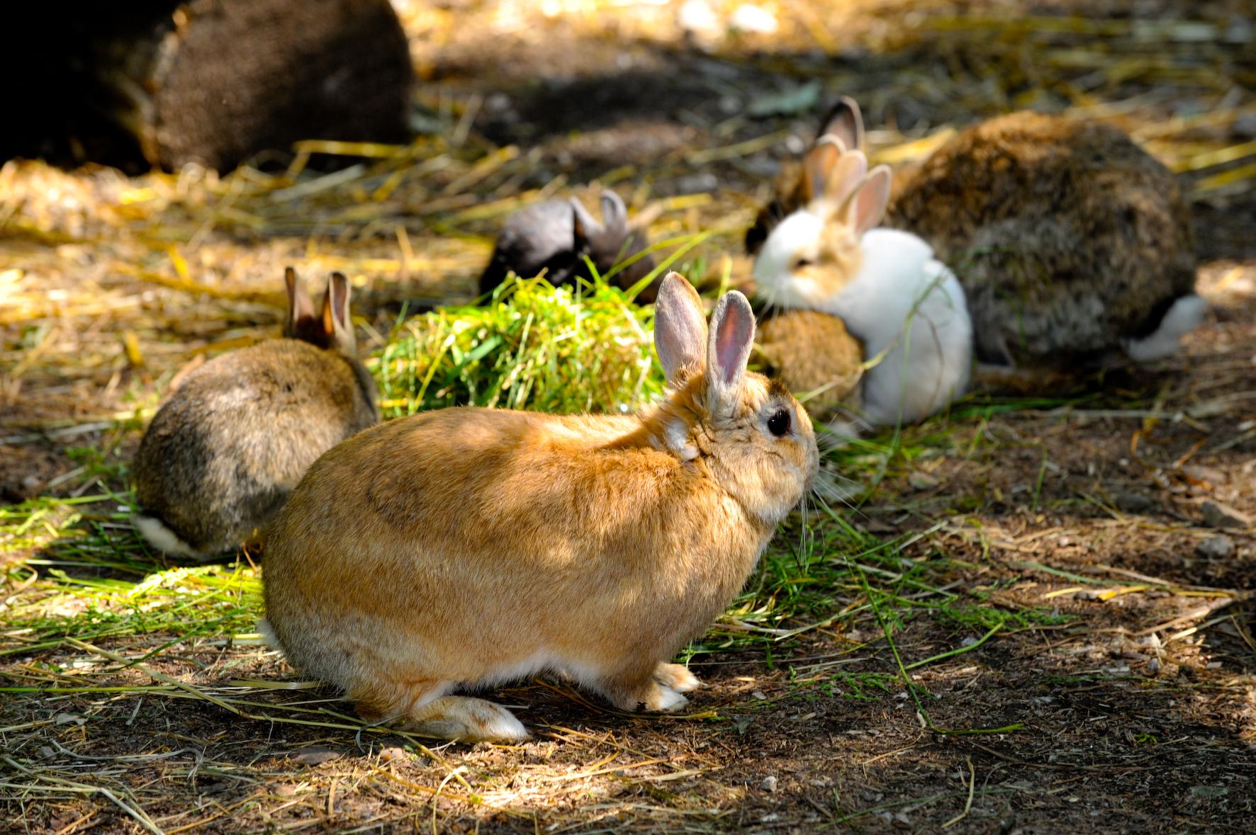 Wald-Vogelstation-Kaninchen