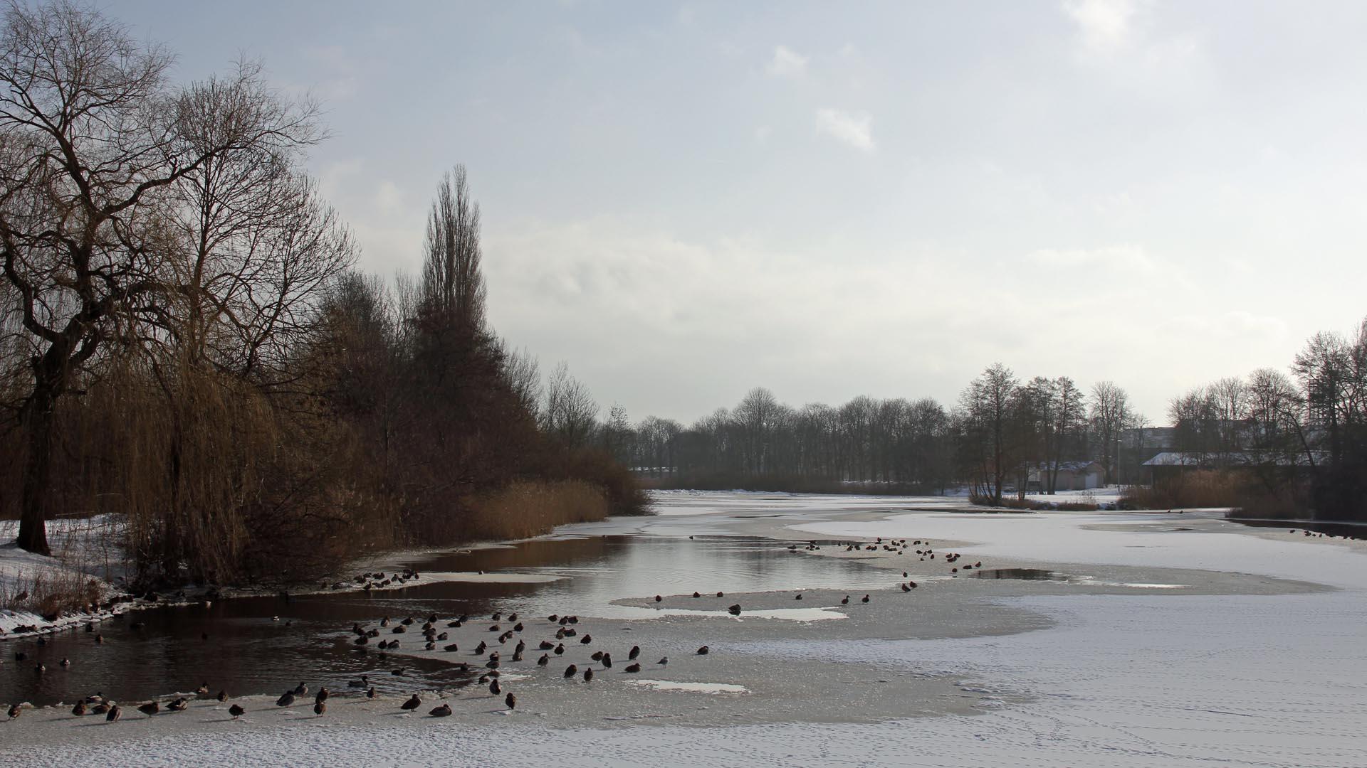 celle-aller-dammaschwiese