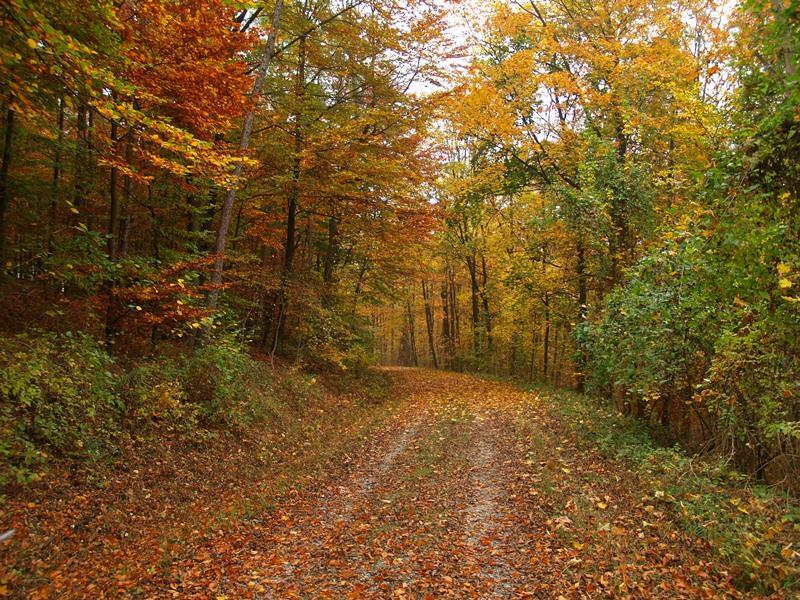 Weg der Stille zwischen Brenkhausen und Corvey