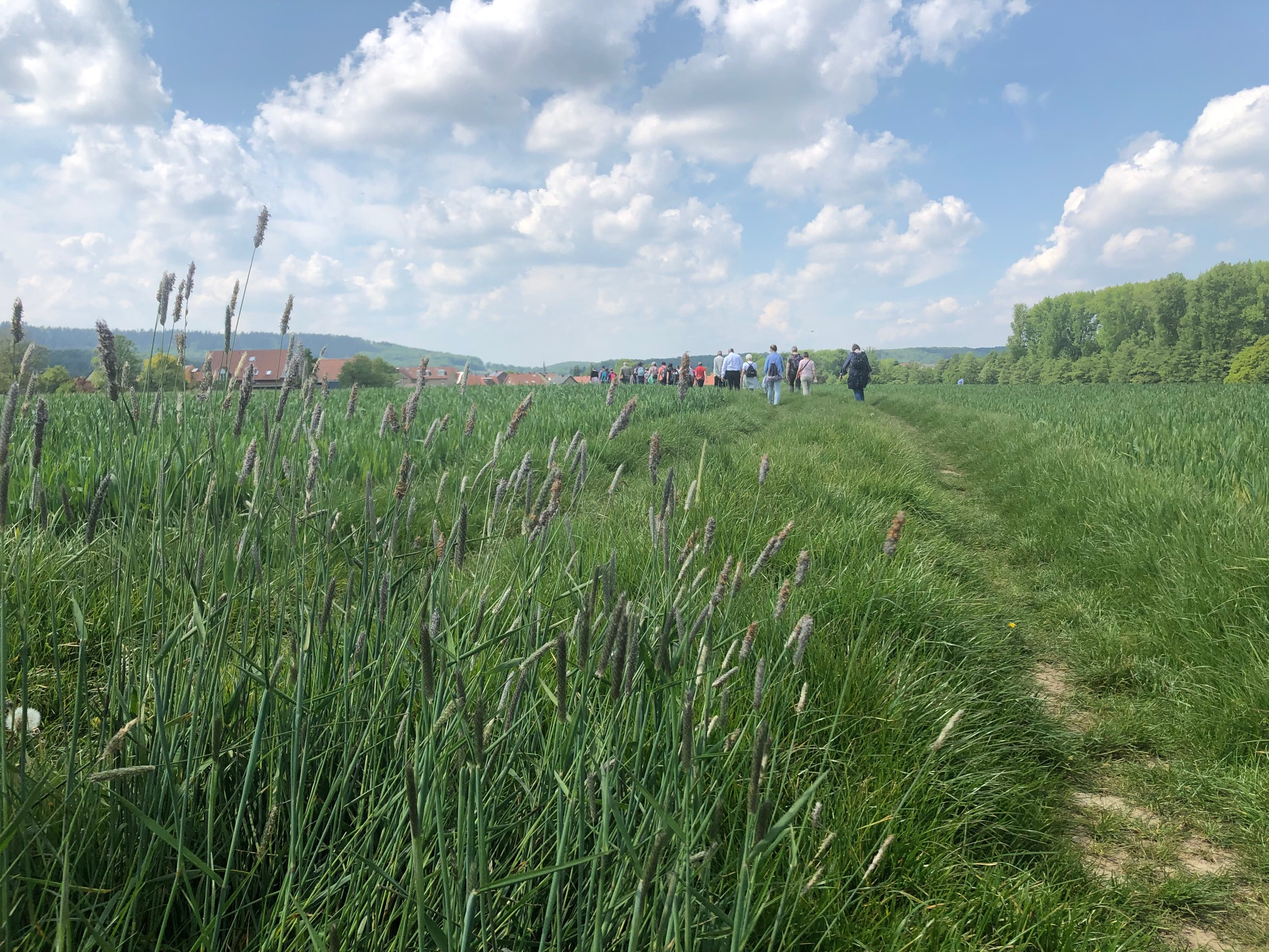 Herrliche Landschaft in Werther (Westf.)