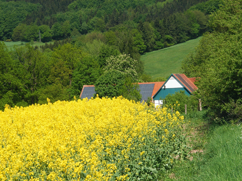 Alter Postweg durch Rapsfeld