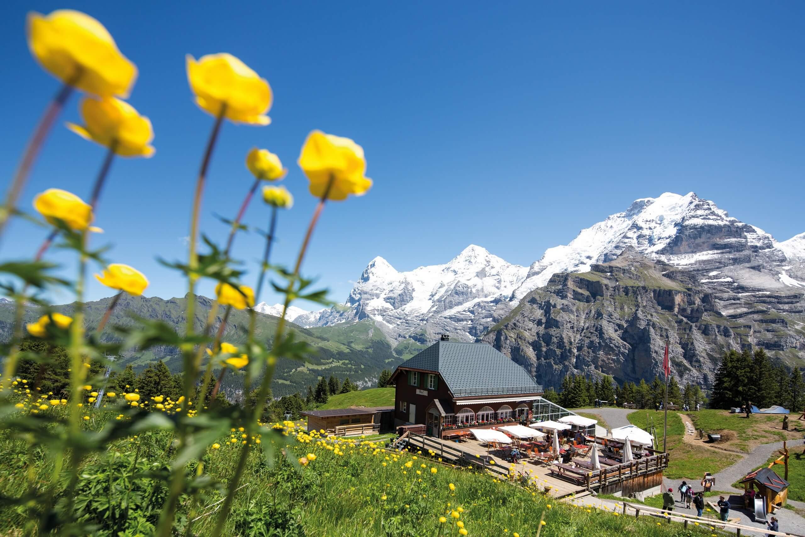 schilthorn-allmendhubel-sommer-restaurant