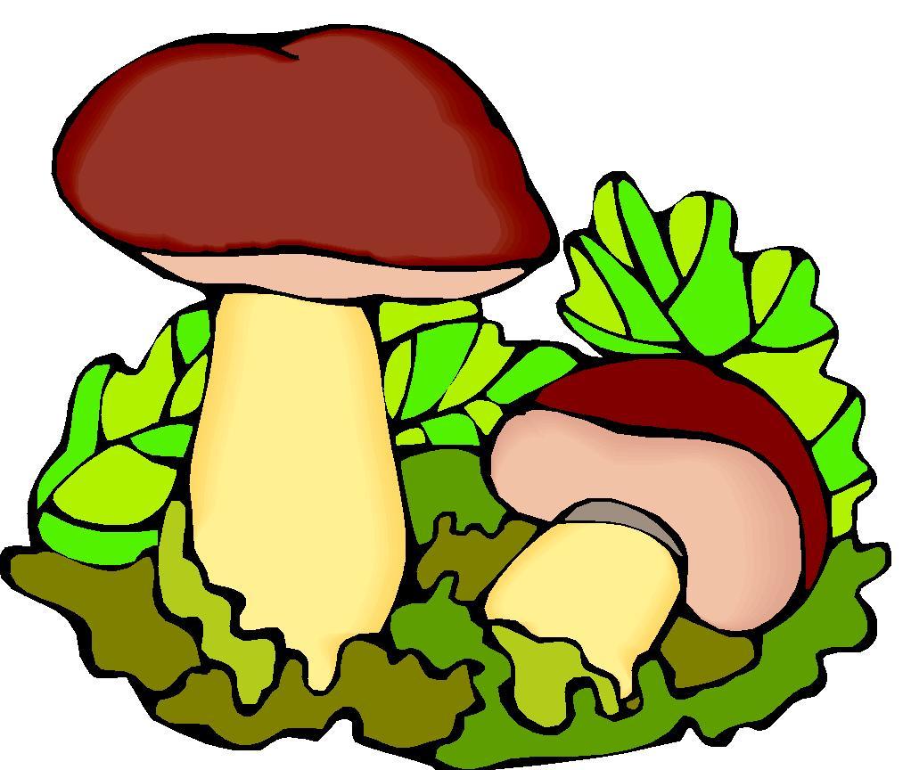 Vortrag: Pilze und Kräuter der Insel Usedom