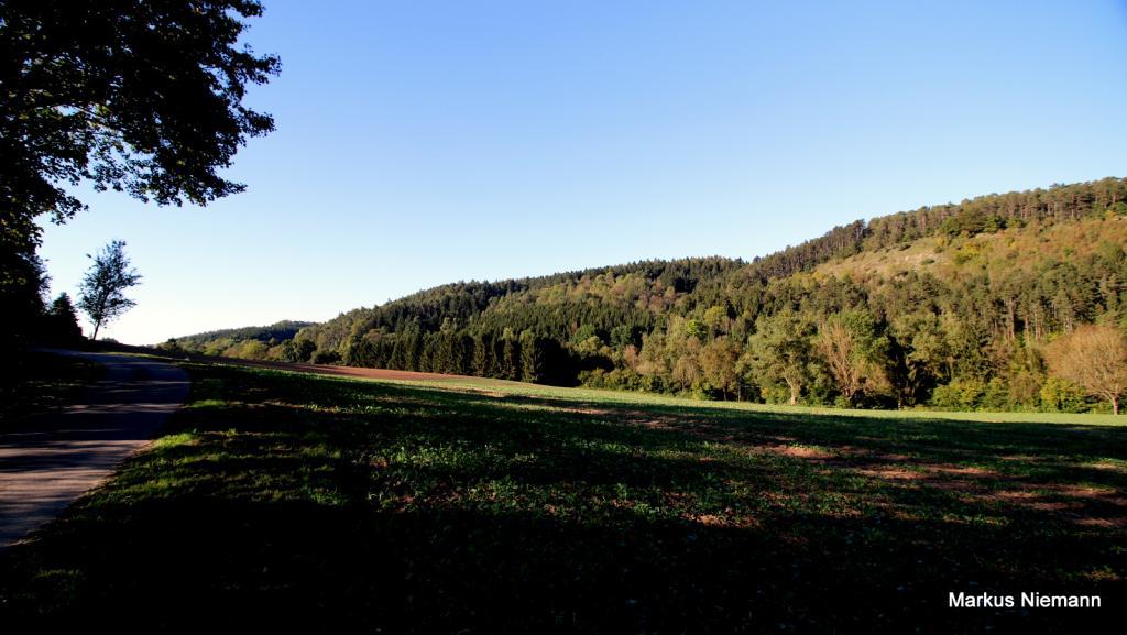 Weserhöhen_im_Springbachtal