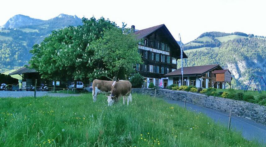 Restaurant Schönbühl Kühe