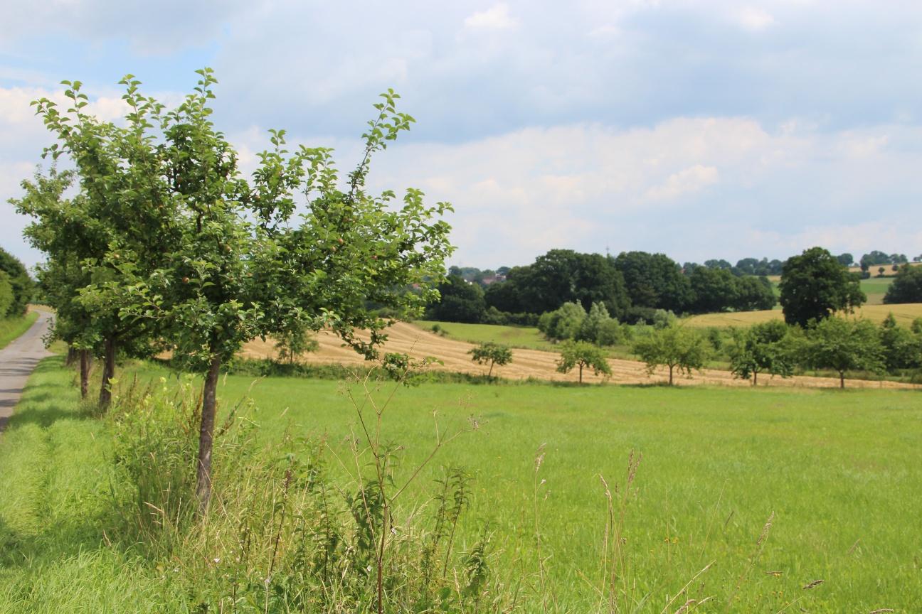 Obstbäume entlang des GPS-Pfades