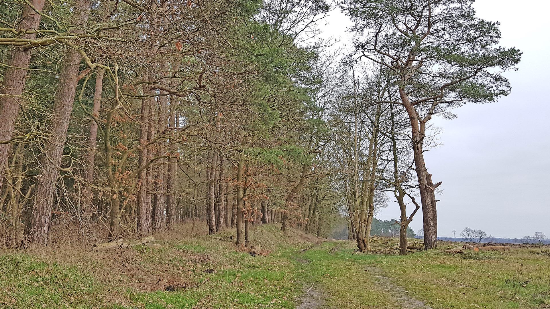 Auf naturnahen Wegen entlang vom Hohen Oerel