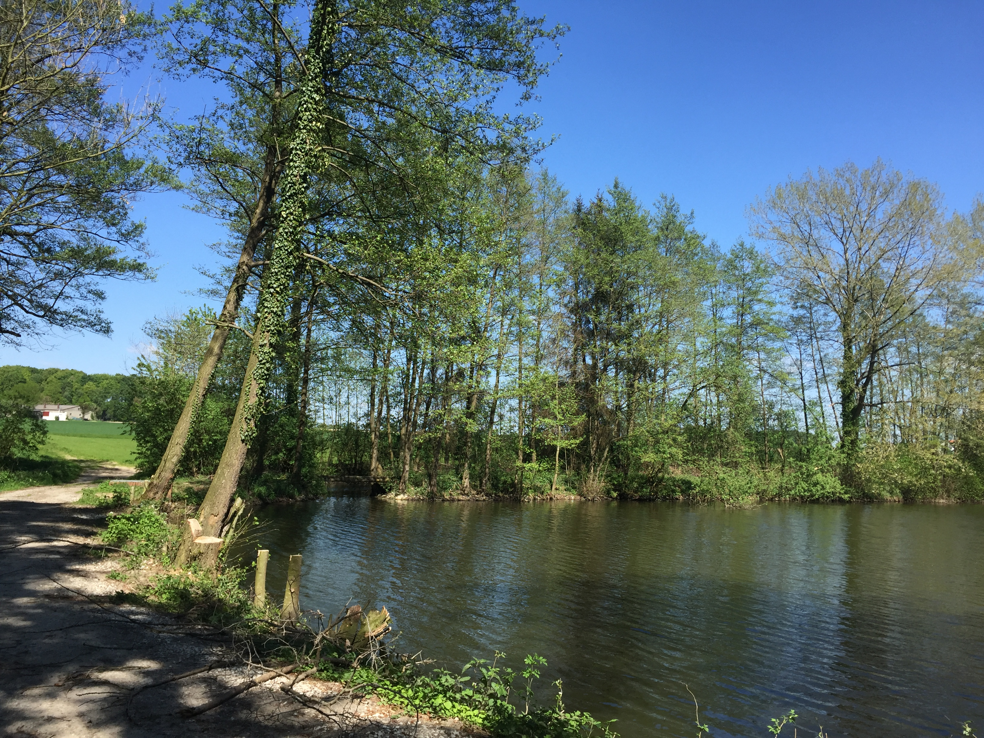 Teich in Theenhausen
