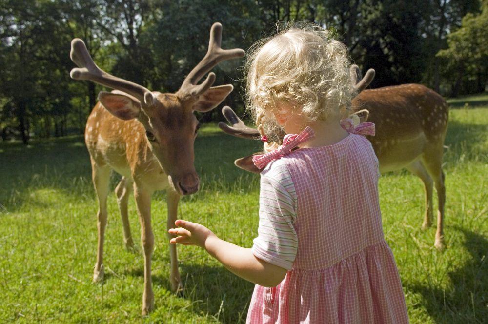 Tiere füttern am Wildgehege