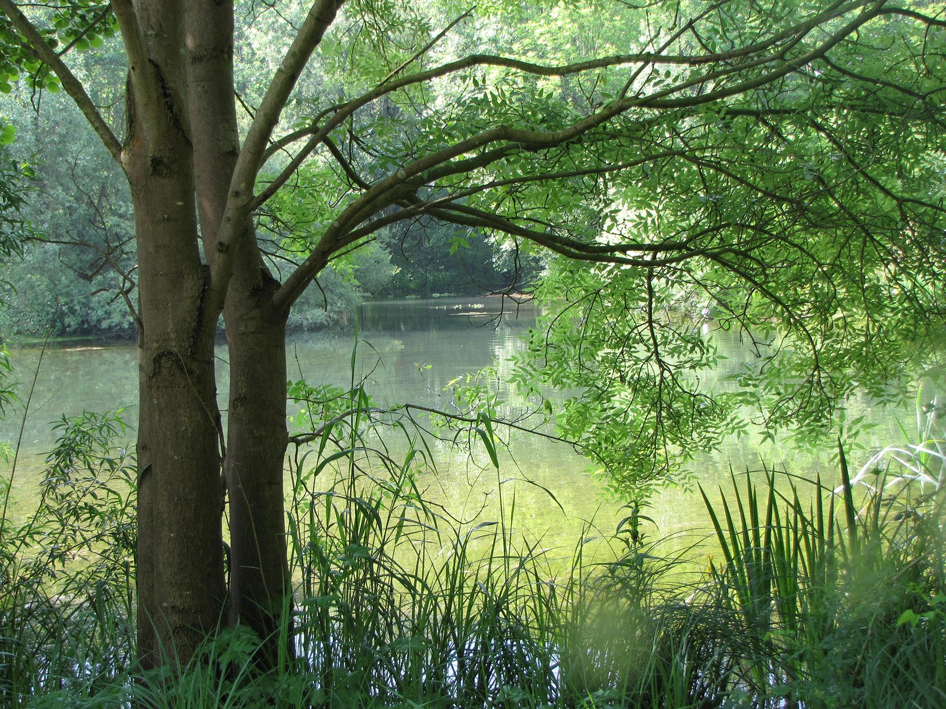 Ein Blick in die renaturierte Auenlandschaft des Schloss- und Auenparks