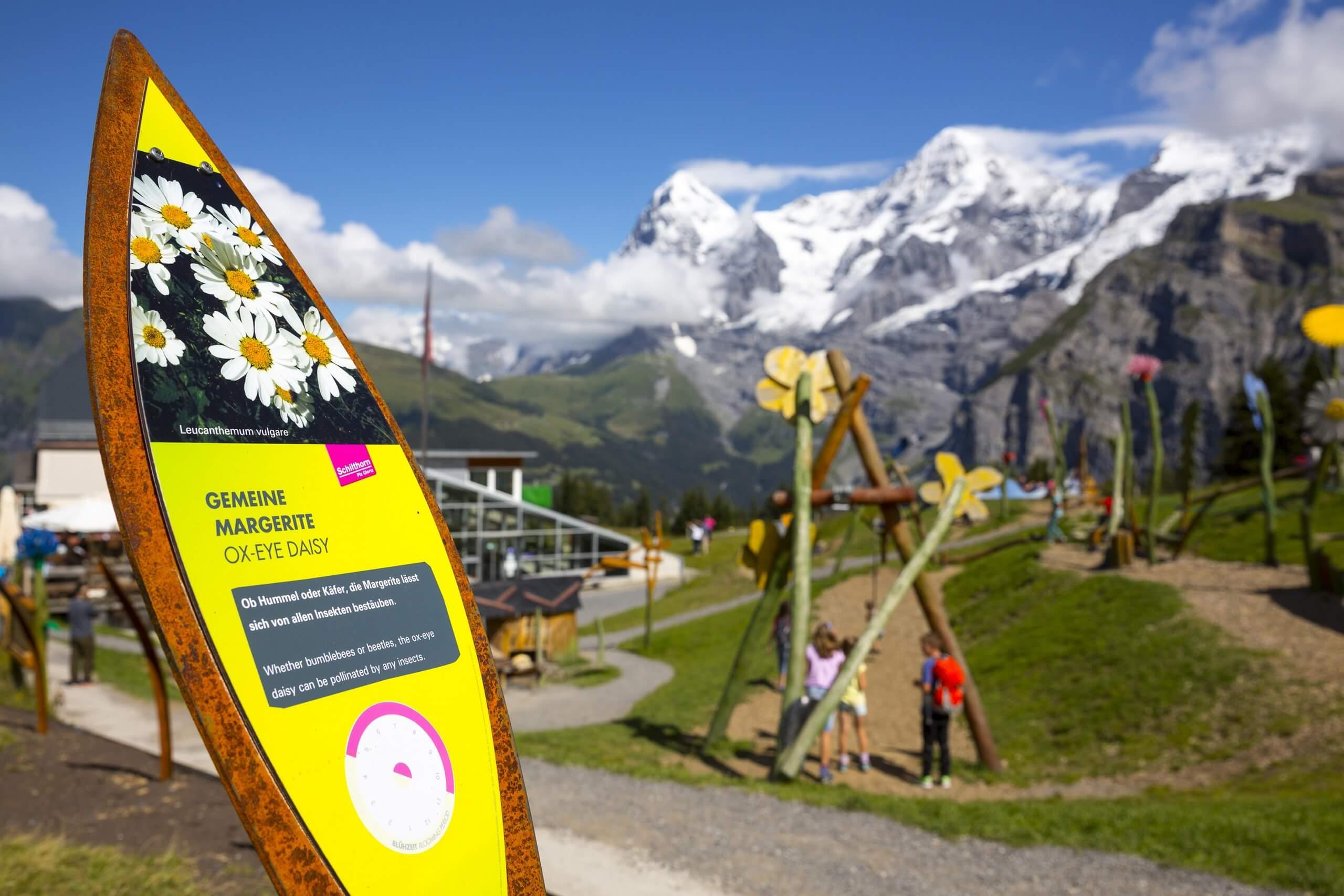 schilthorn-allmendhuben-flowertrail-panorama