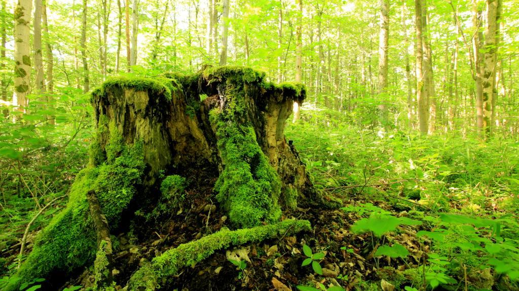 Natur im Heineberg