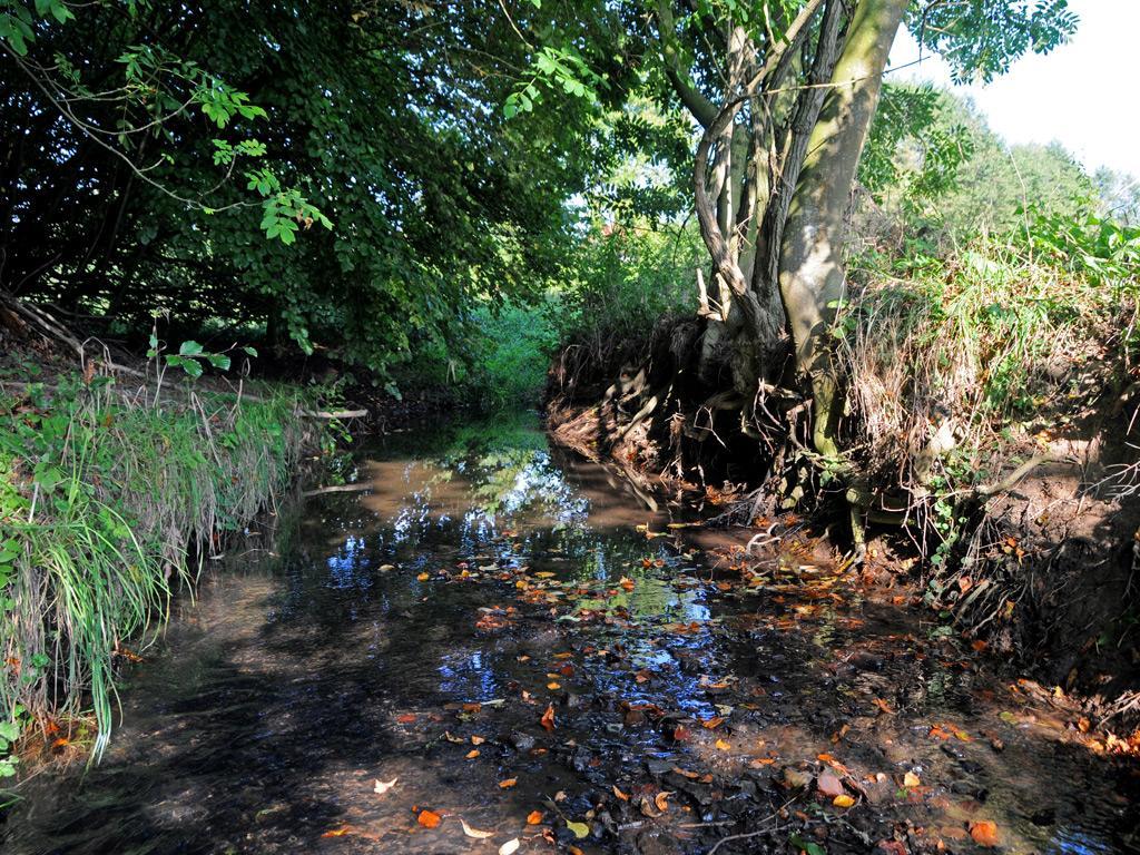Kilverbach im Naturschutzgebiet
