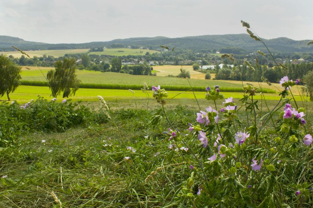 Blick in die Landschaft bei Lage-Hörste