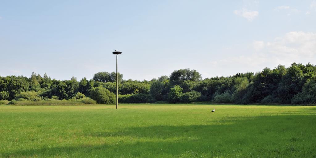 Storchenhorst inmitten einer Feuchtwiese