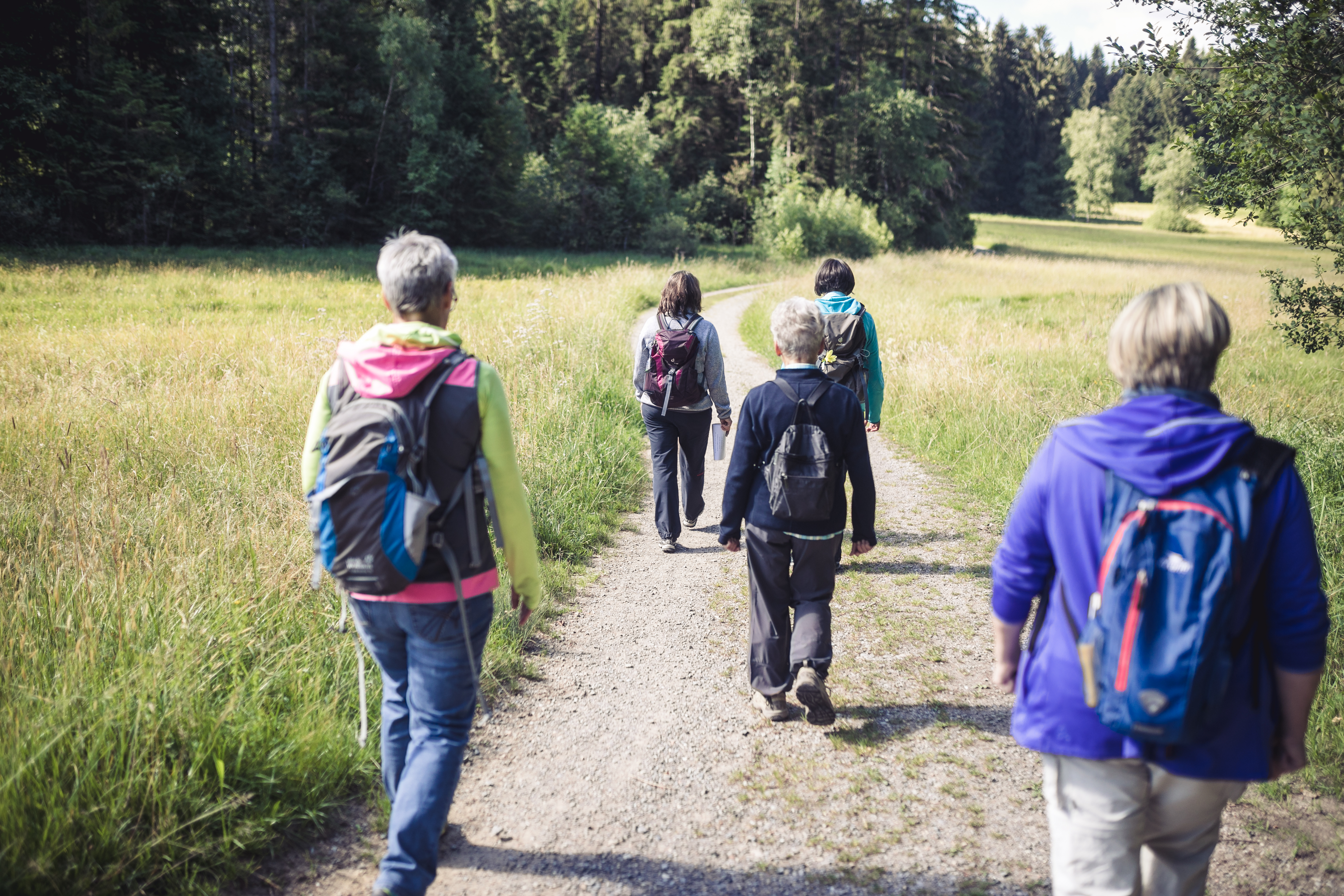 Wanderung Waldseegebiet