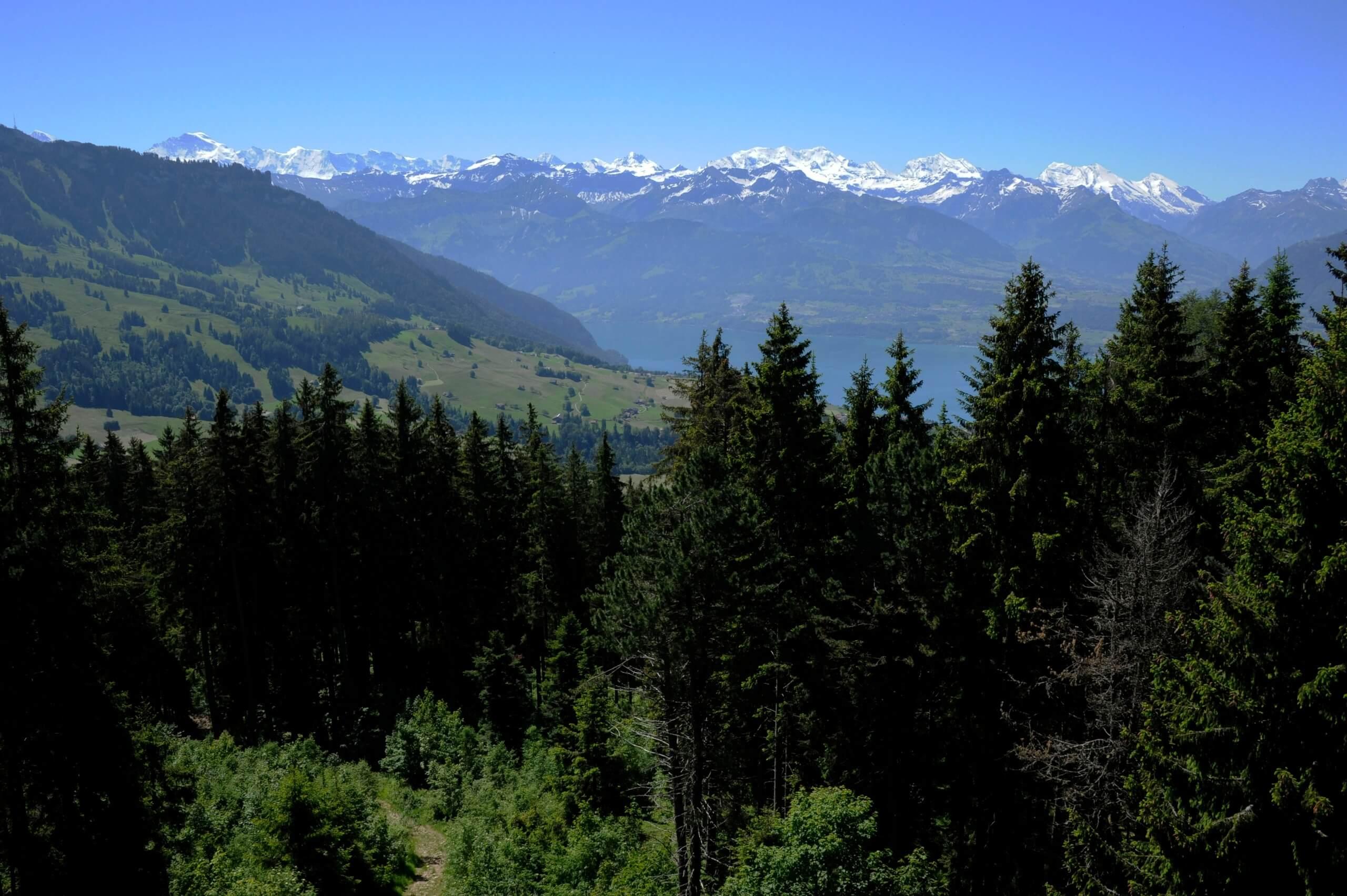 sigriswil-blumenturm-sommer-berge-aussicht