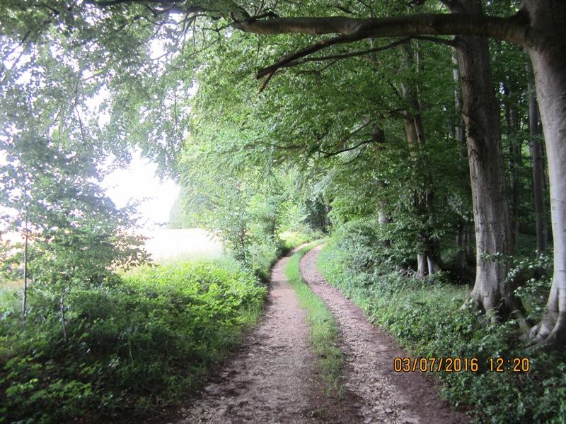 auf versteckten Wegen in Richtung Hornoldendorf