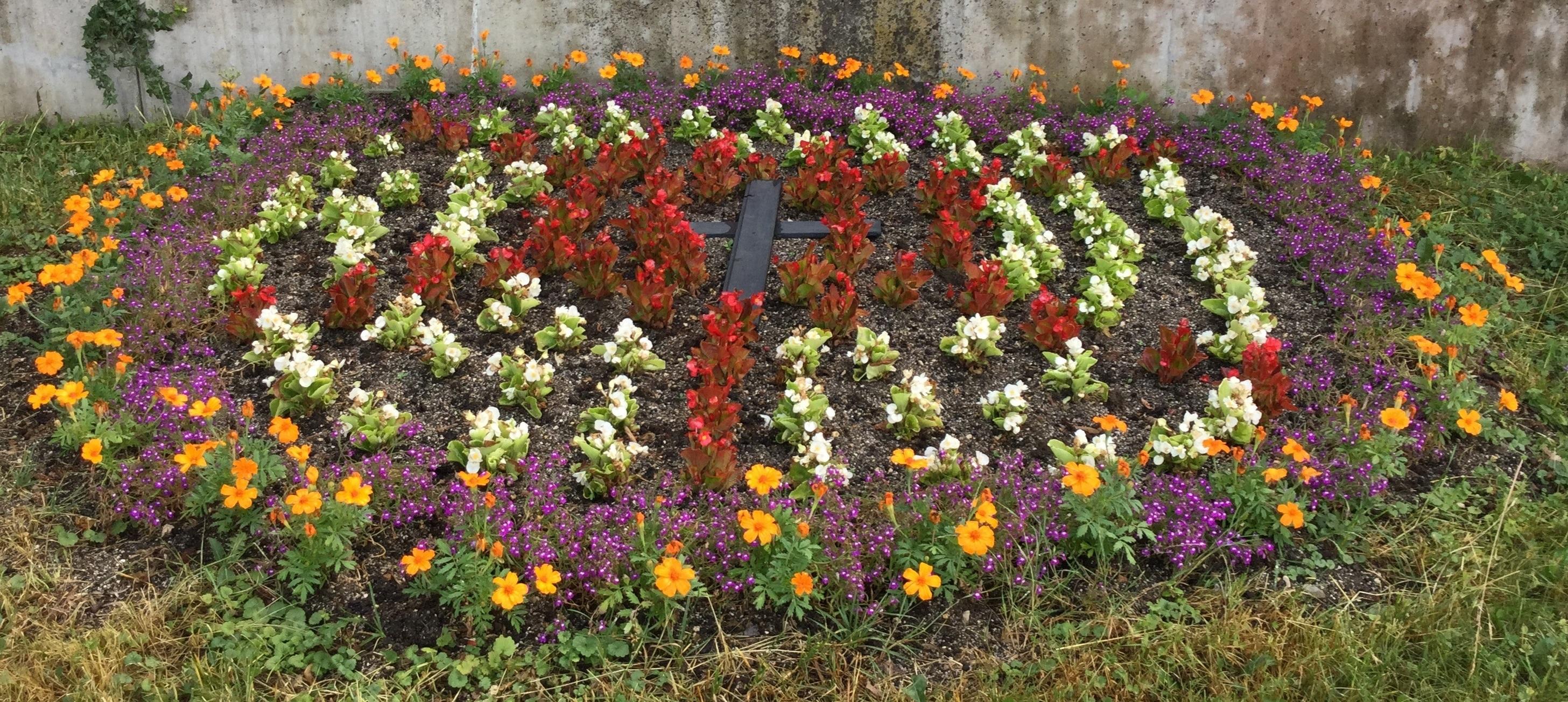 Lutherrose im Bibelgarten