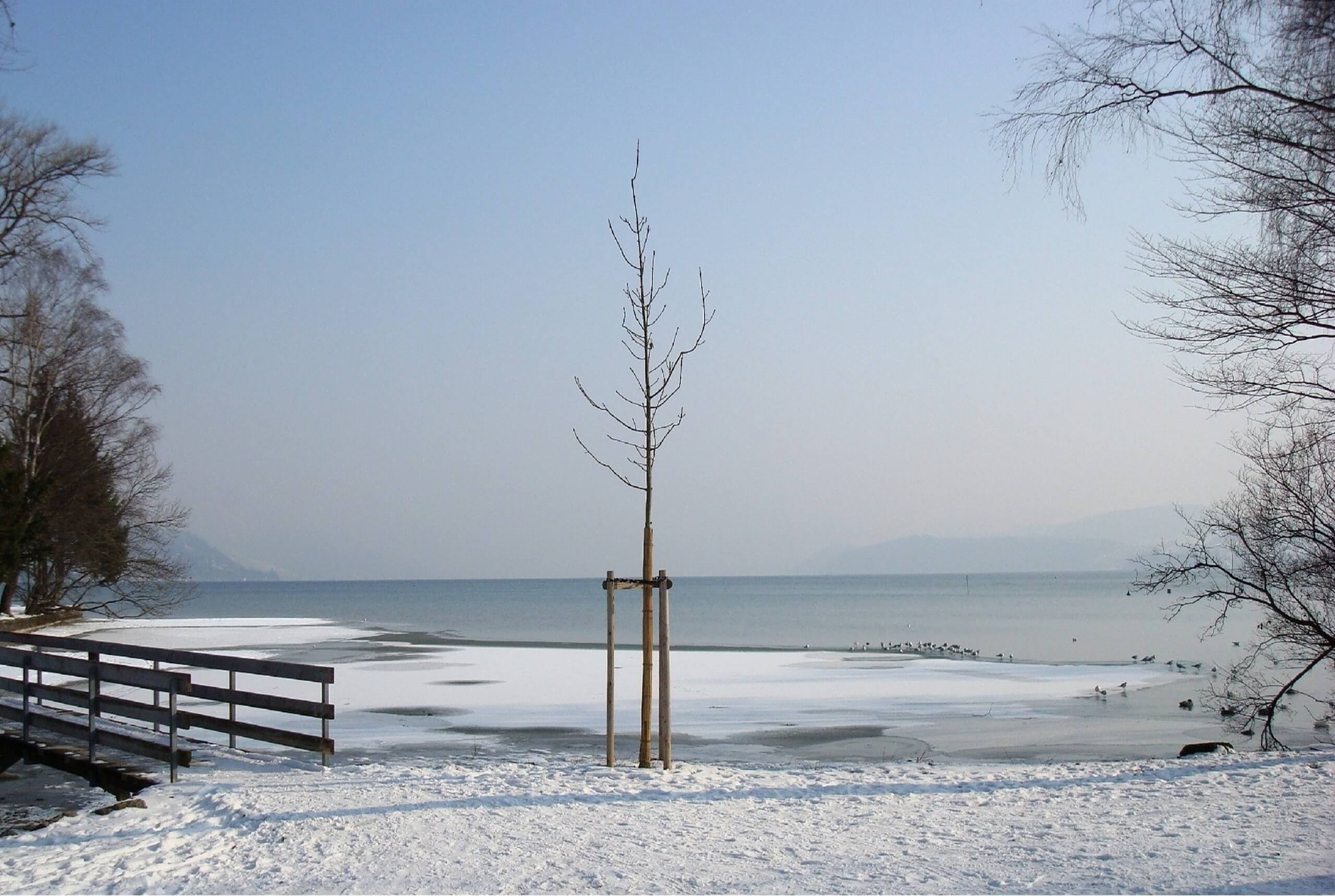 thun-grunder-inseli-winter-thunersee