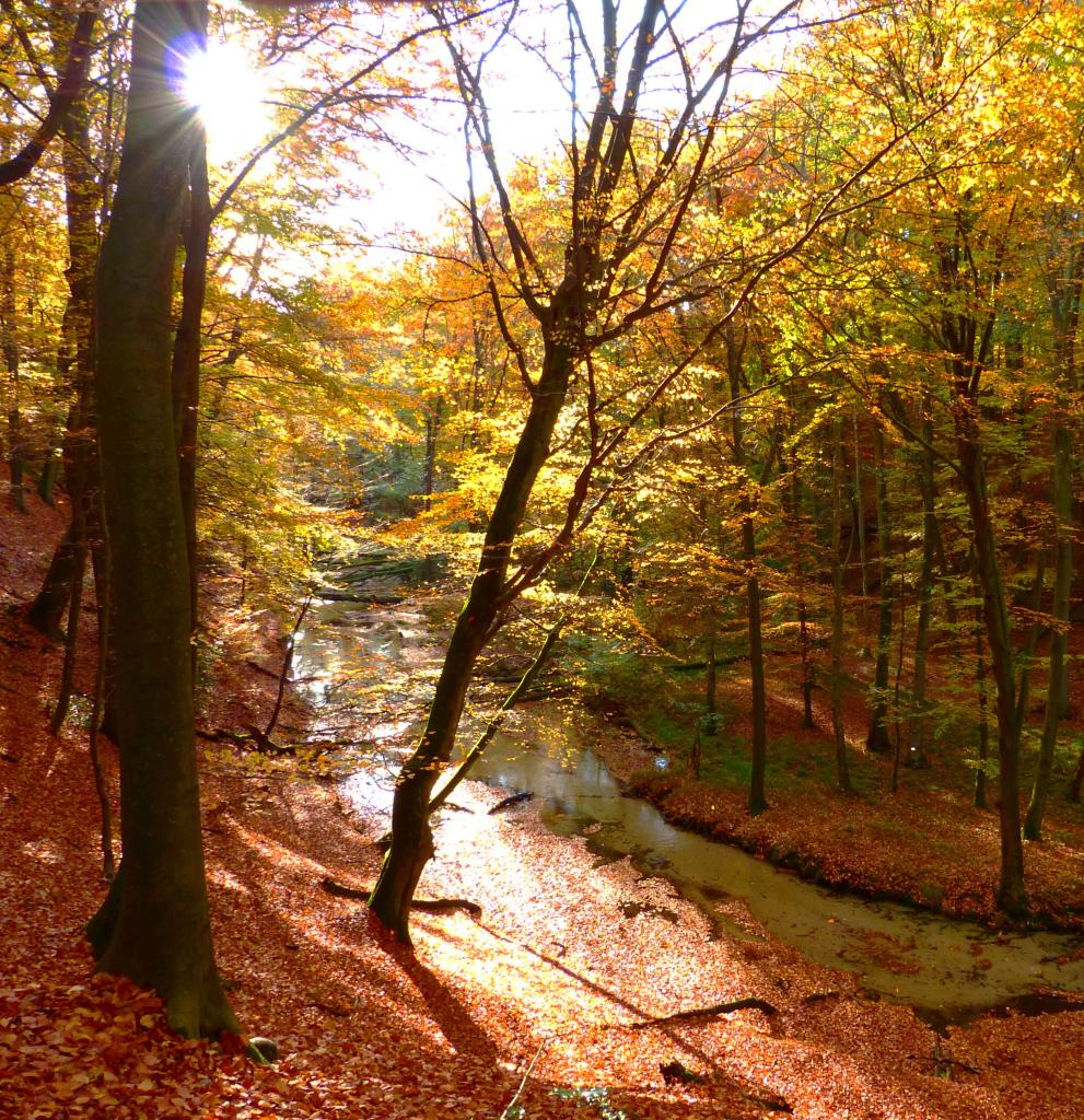 Herbst im Furlbachtal