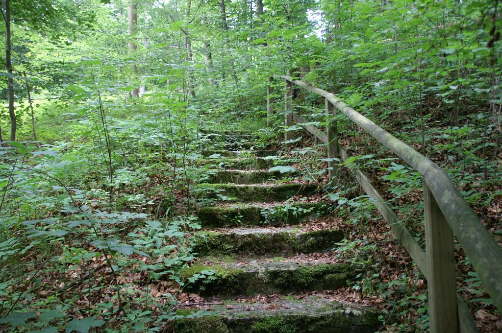 Über alte Steinstufen führt der Pfad hinauf in den Wald