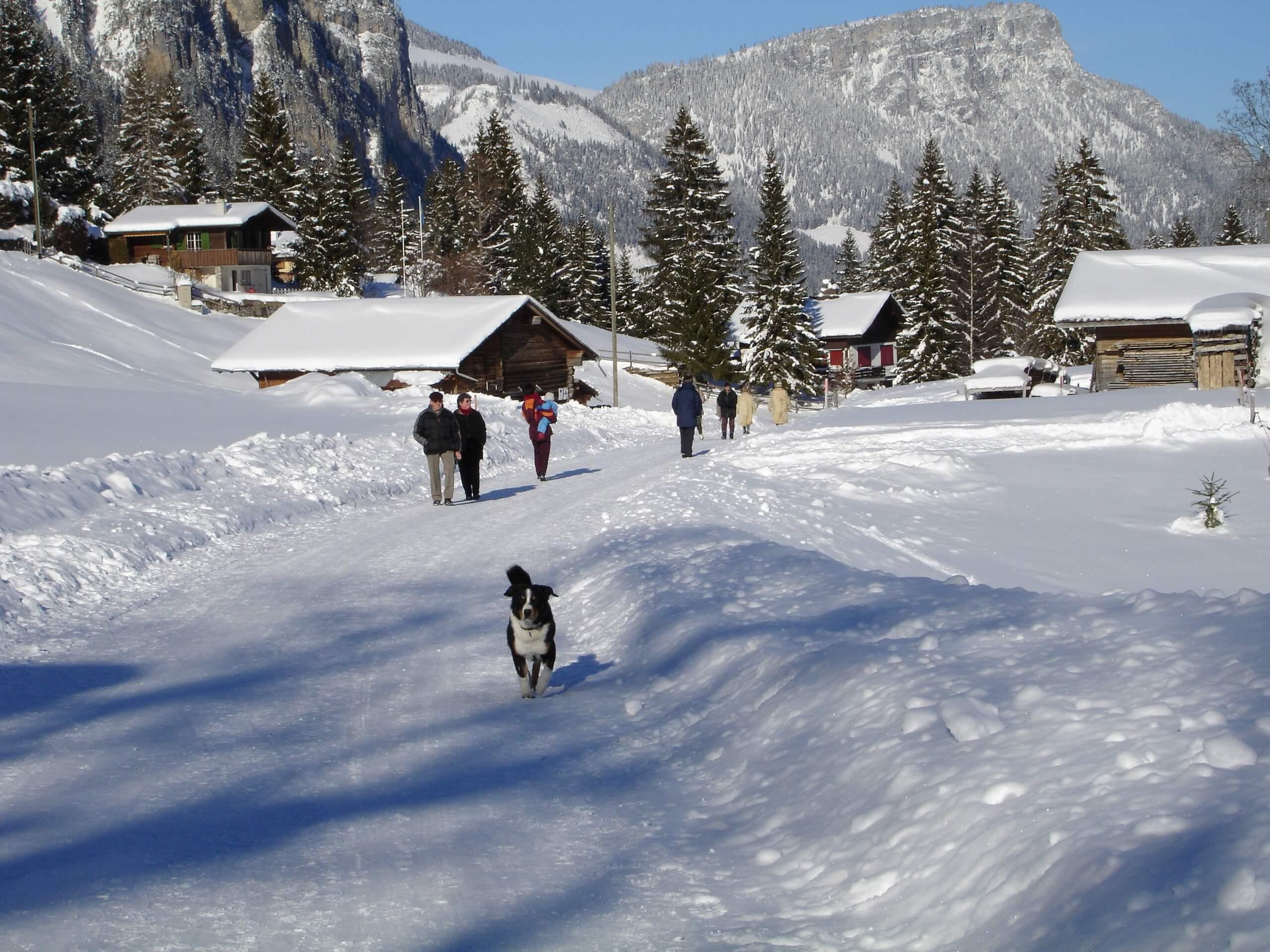 diemtigtal-erb-sport-schneeschuhwandern-winter