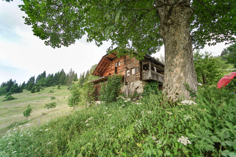 Alpsommer auf der Alp Allmetli