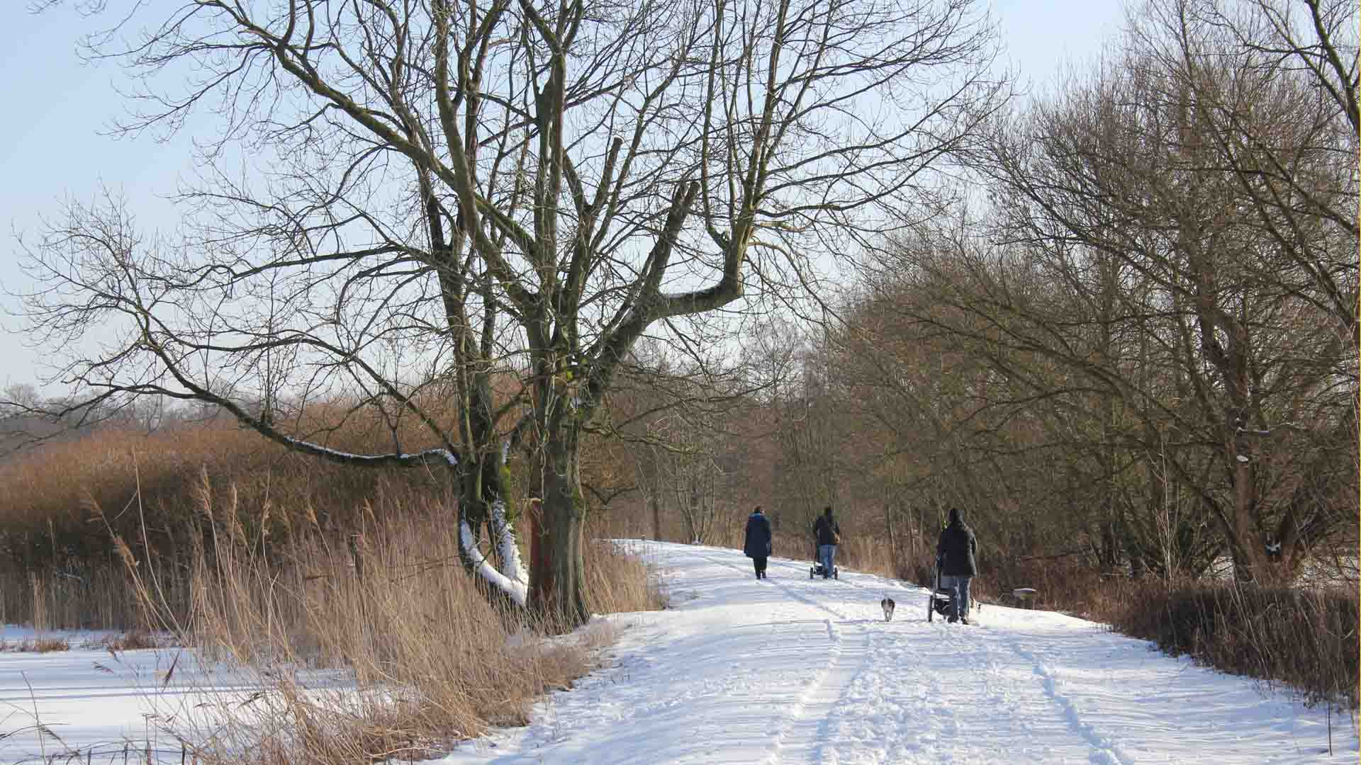 celle-dammaschwiese-winter