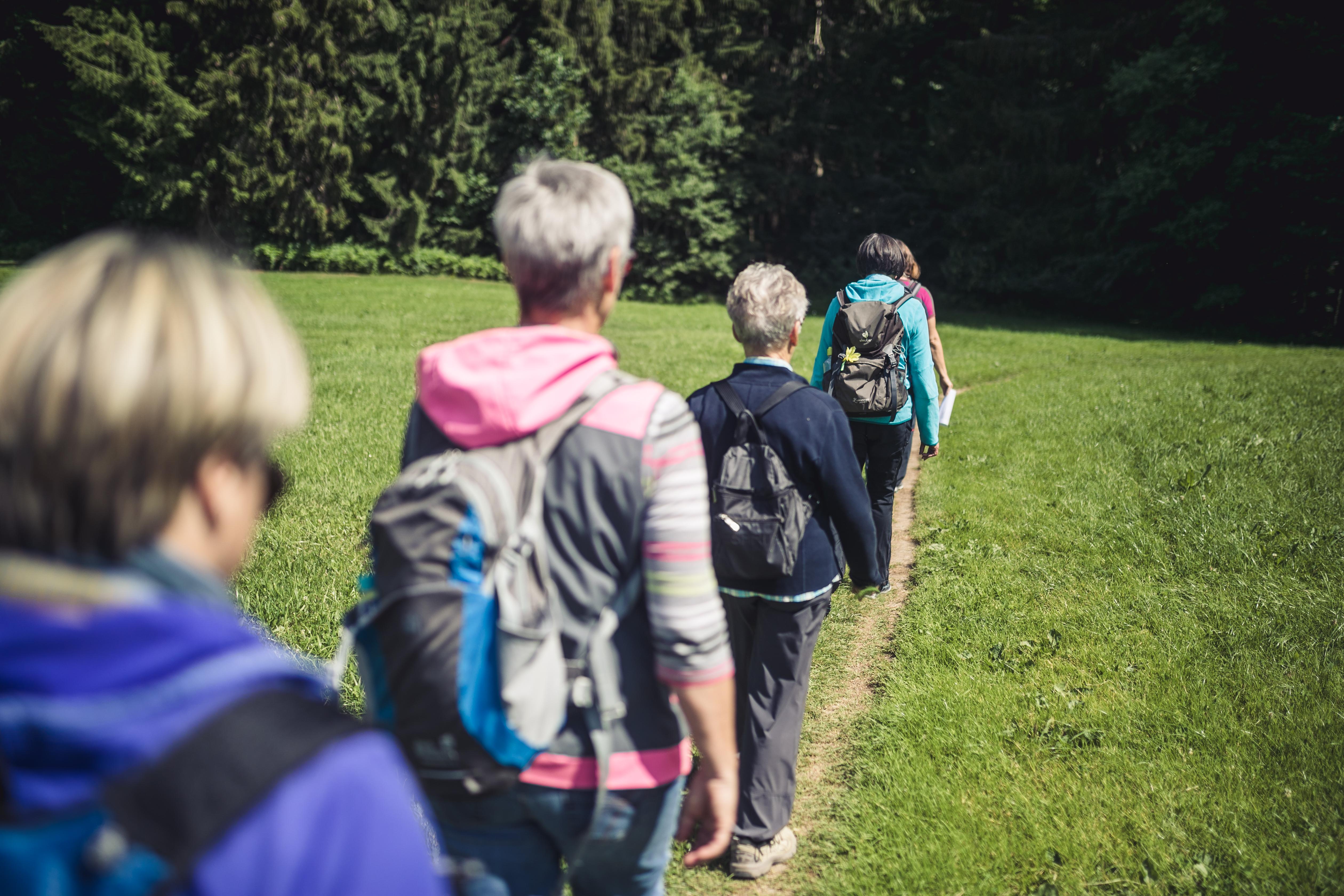 Wanderweg am Waldsee