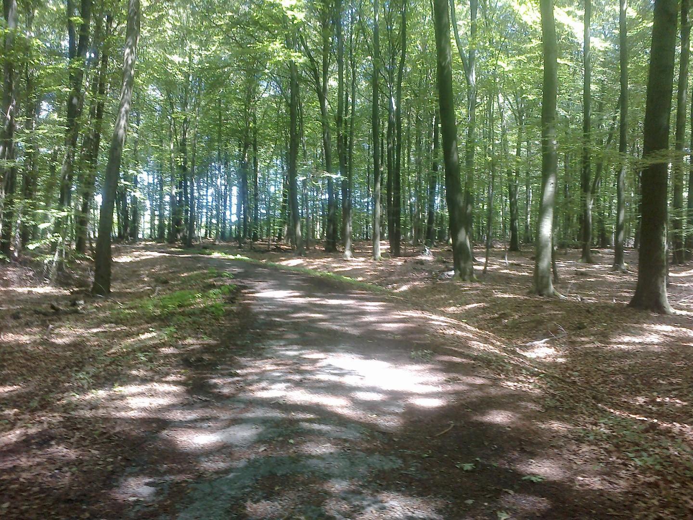 Waldweg im Leistruper Wald