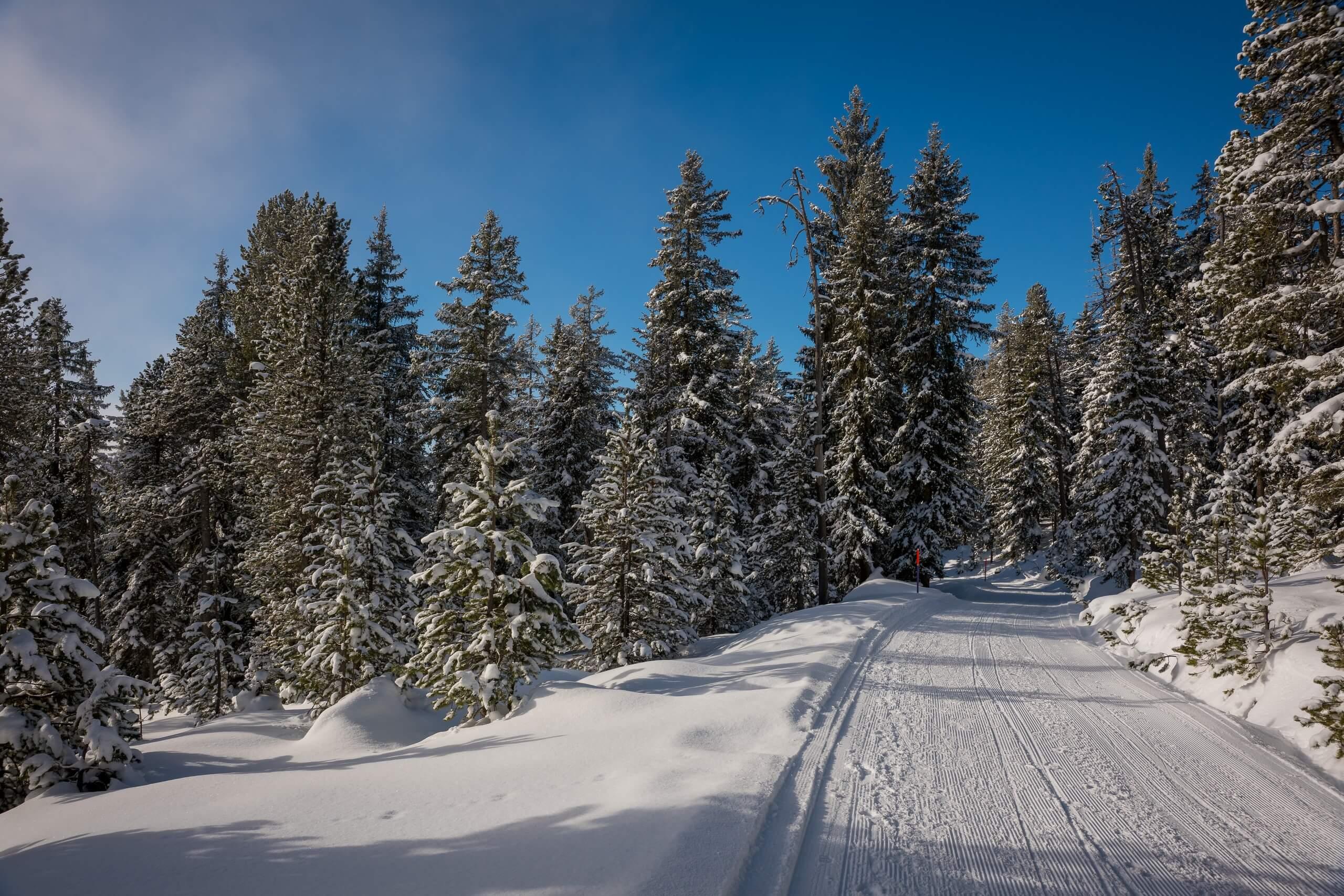 niederhorn-winter-schlittelpiste-verschneite-baeume