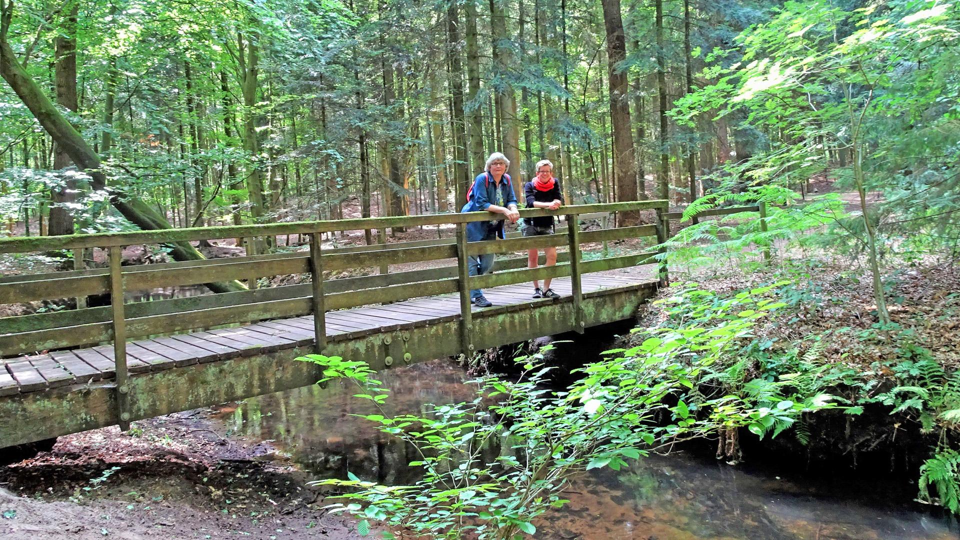 Mitten im Kuhmühler Wald der Kuhbach
