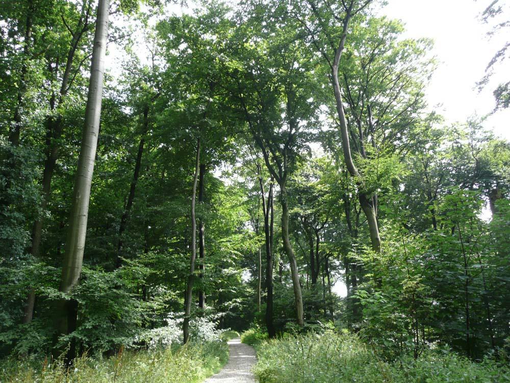 Wege durch Buchenwald auf Kalkgestein