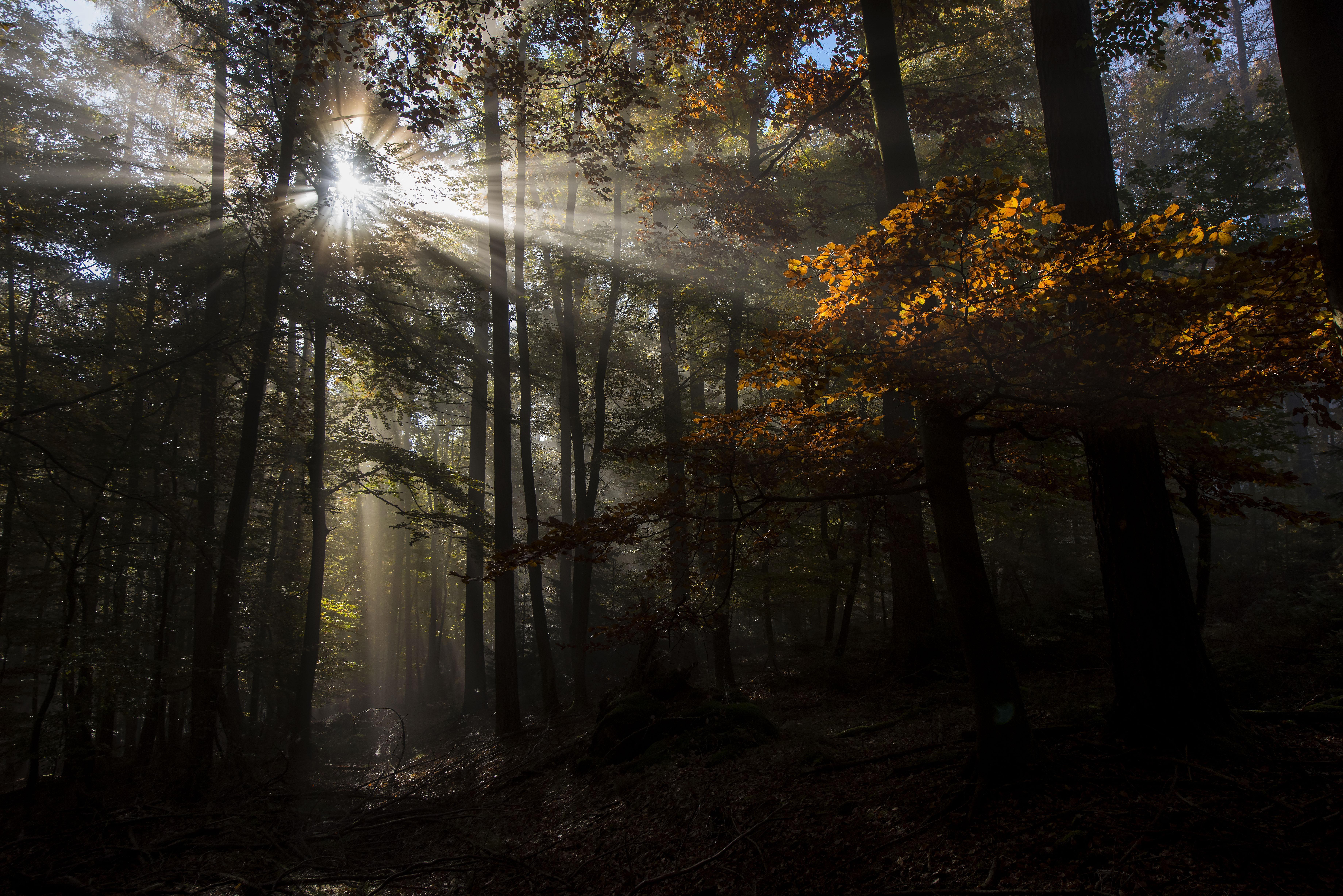 Sun rays in the morning fog in Germany. © Wildnis-in-Deutschland.de, Daniel Rosengren