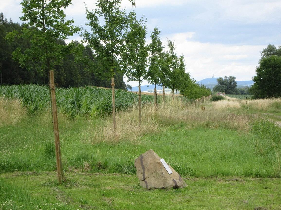 Baumreihe gepflanzt zur 1000 Jahrsfeier