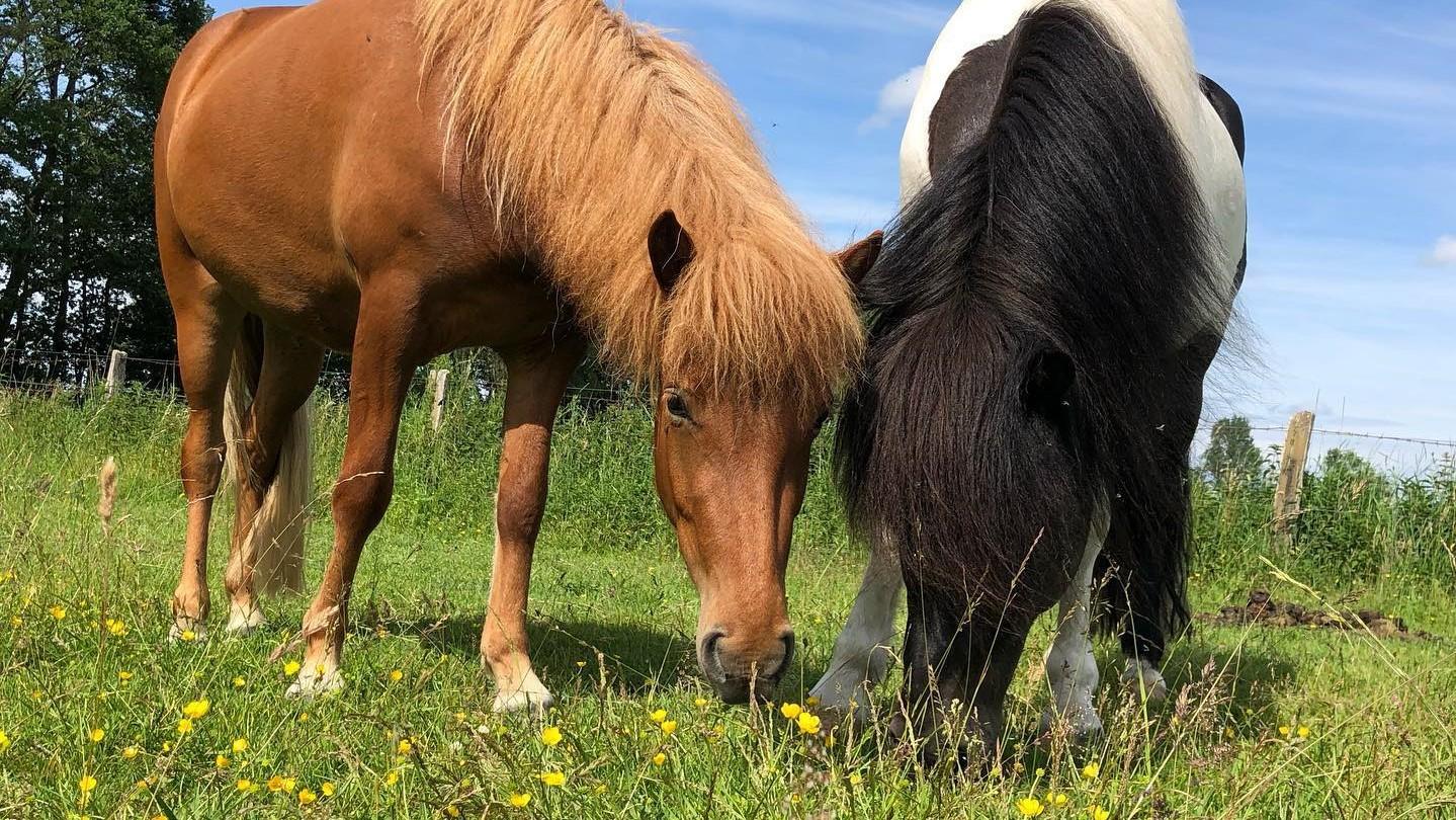 Wir züchten auch Pferde für den Verkauf