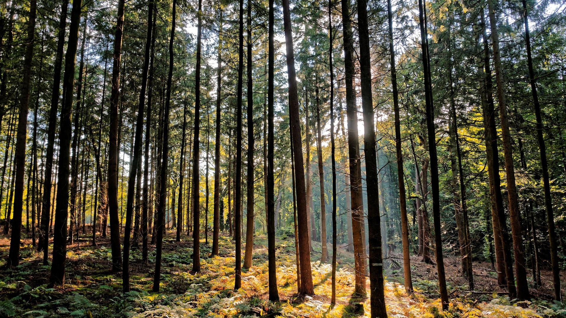 Zunächst geht es durch den dichten Kuhmühler Wald