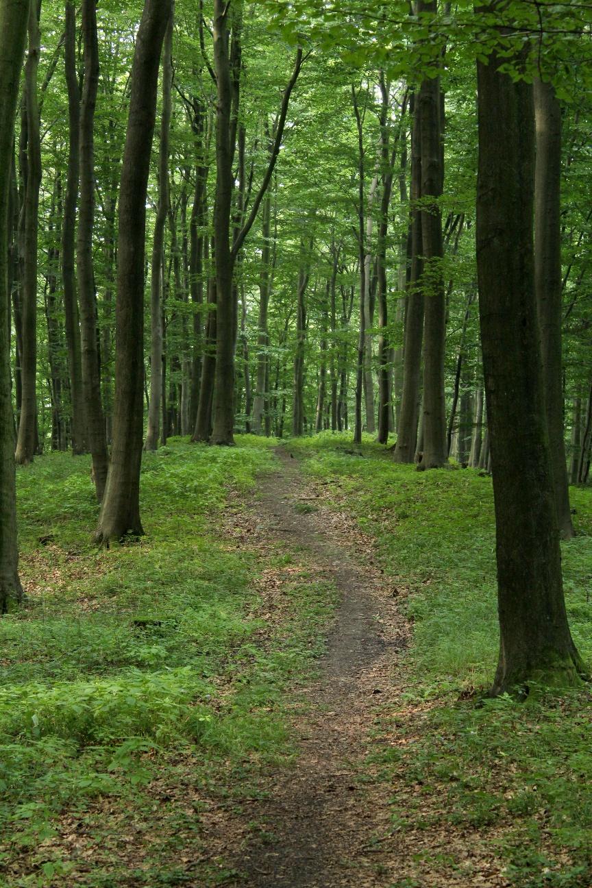 Waldpfad auf dem Lerchenspornweg