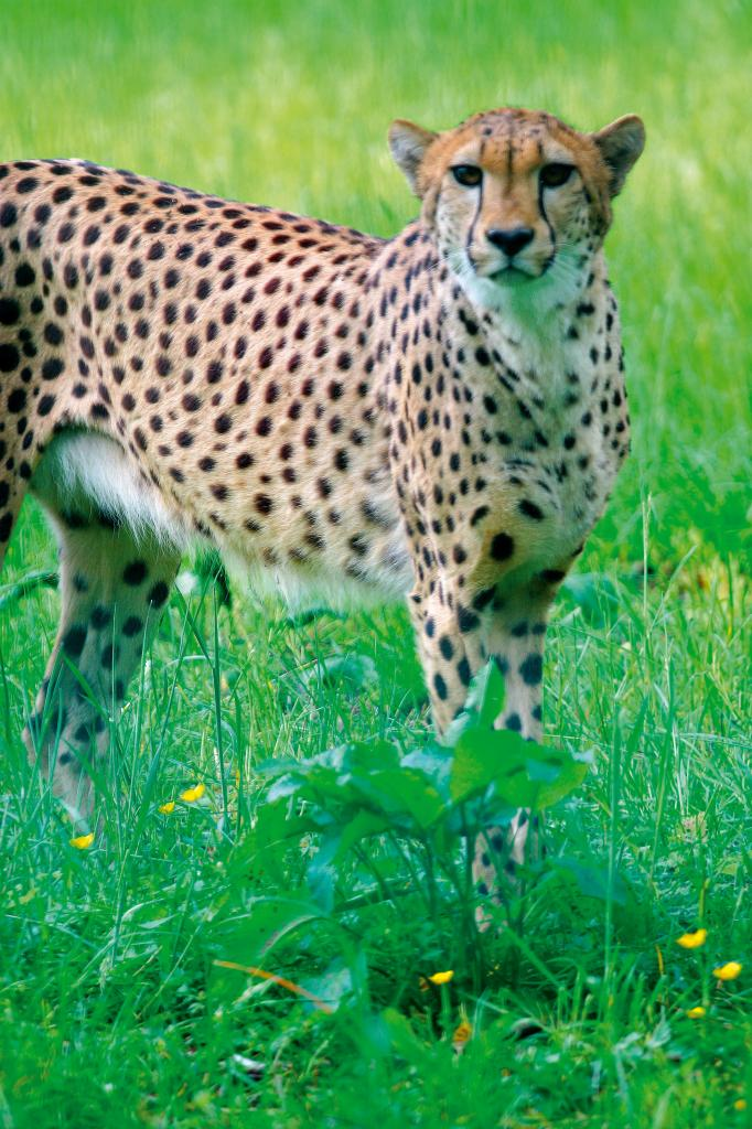 Nadermann´s Tierpark
