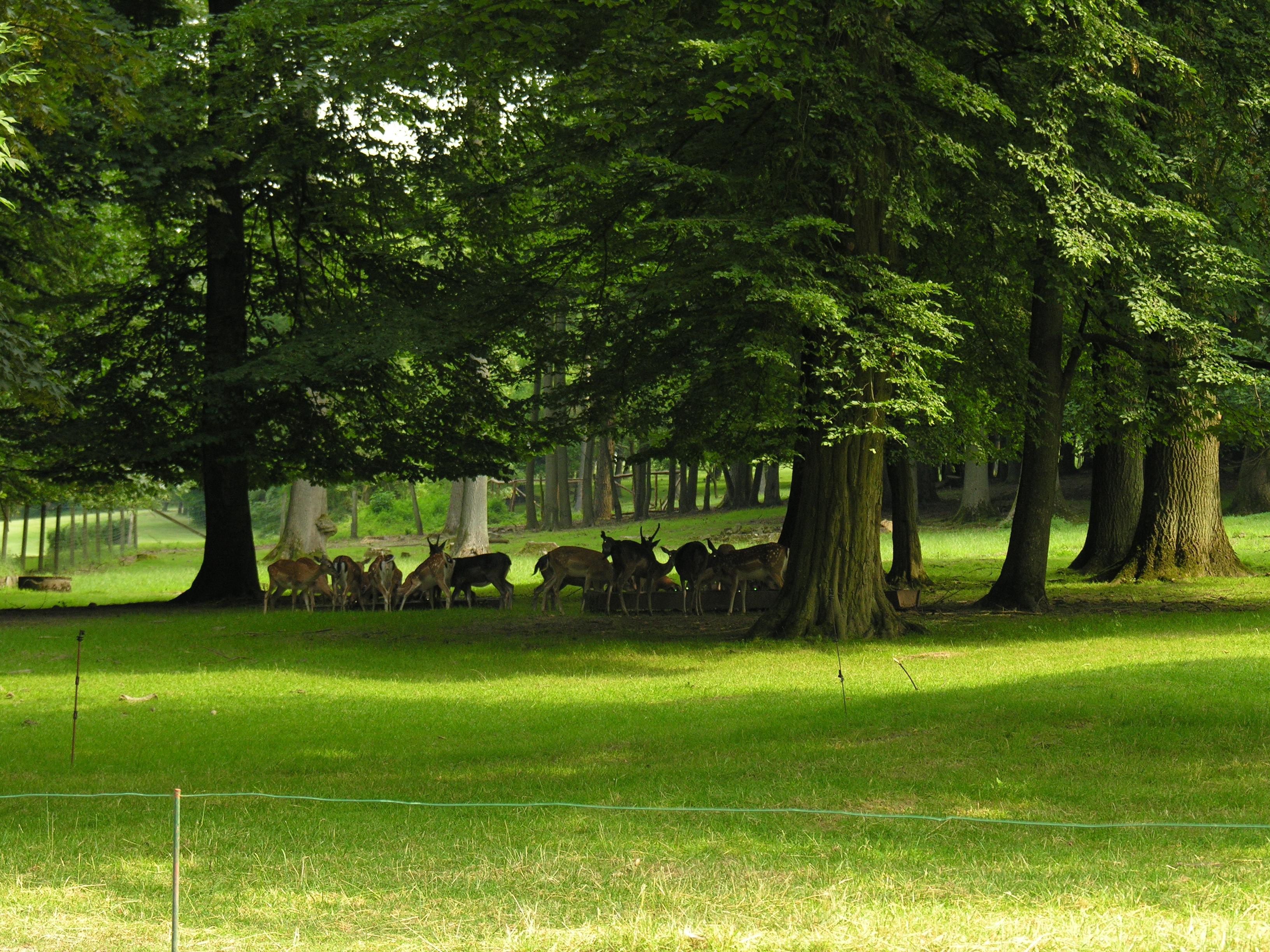 Wild im Park